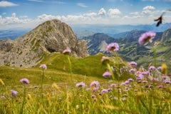 Гора с цветками луга Стоковое Изображение RF