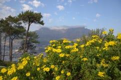 Гора таблицы, Cape Town Стоковая Фотография