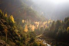 Гора Тара Стоковые Изображения