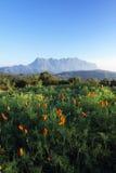 гора цветка Стоковое Изображение