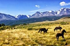Гора Altai ландшафта Стоковое Изображение