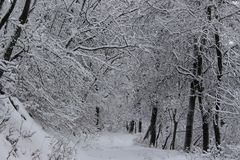 Гора Belasitsa снега в январе 2019 над Petrich, Болгарией стоковые фото