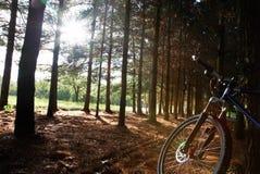гора bike Стоковое Изображение