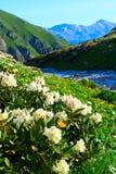 гора caucasus Стоковая Фотография RF