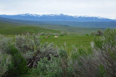 Гора Cuddy, Айдахо Стоковое Изображение RF