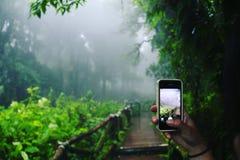 Гора Doi Inthanon в тумане утра Стоковая Фотография