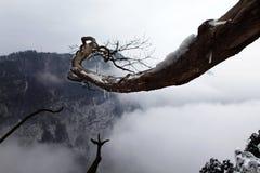 гора emei 8 Стоковая Фотография RF