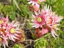 Гора flowers2 Стоковая Фотография