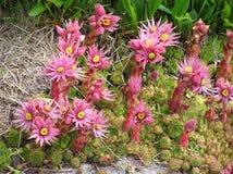 Гора flowers1 Стоковое Изображение RF