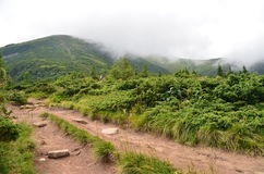 Гора Hoverla Стоковые Изображения