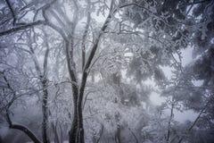 Гора huangshan ветвей дерева Snowy стоковые изображения
