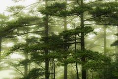гора huangshan фарфора Стоковая Фотография