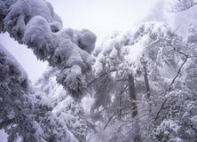 Гора huangshan Snowy стоковые фотографии rf