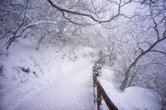 Гора huangshan Snowy стоковые изображения