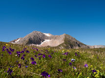 Гора Oshten среди высокогорных цветков Стоковое Изображение