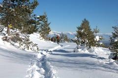 Гора Osogovo, Болгария, Европа Стоковые Фото