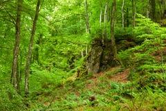 гора pyrenees зеленого цвета пущи Стоковые Изображения