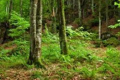 гора pyrenees зеленого цвета пущи Стоковые Изображения RF