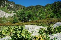 гора pyrenees стоковые фотографии rf