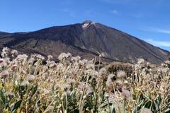 Гора Teide, Тенерифе стоковое фото