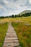Гора Vitosha Стоковые Фото