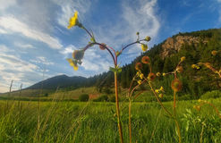 Гора Wildflower Стоковая Фотография RF