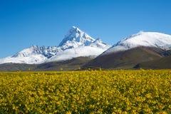 Гора ZhuoMuLaRi снежка Стоковое Фото