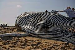 Горбатый кит младенца стоковые изображения