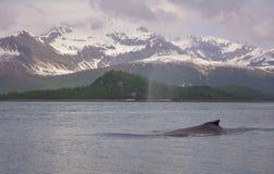 Горбатый кит Стоковое фото RF