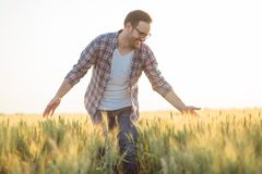 Гордый счастливый молодой фермер идя через пшеничное поле, нежно касаясь заводам с его руками стоковое фото rf