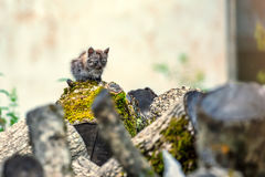 Горемычный рассеянный котенок Стоковая Фотография