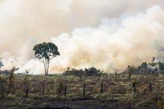 Горение Амазонии бразильянина Стоковые Изображения RF