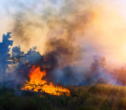 Горение лесного пожара, лесной пожар близкий вверх на времени дня стоковые изображения rf