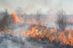 горение заросли Стоковое Изображение RF