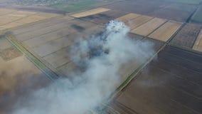 Горение соломы риса в полях Курите от горения соломы риса в проверках Пожар на поле стоковая фотография