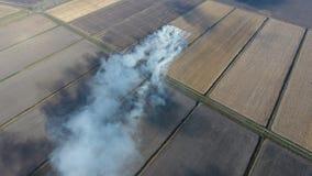 Горение соломы риса в полях Курите от горения соломы риса в проверках Пожар на поле стоковые фото