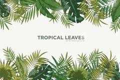 Горизонтальная предпосылка с зелеными листьями тропических пальмы, банана и monstera Элегантный фон украшенный с бесплатная иллюстрация