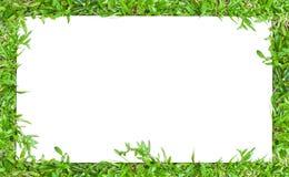 Горизонтальная рамка граници травы Стоковые Фотографии RF
