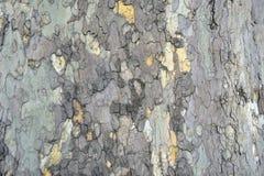 Горизонтальная текстура коры дерева платана Стоковая Фотография RF
