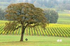 горизонтальное вино автошины Стоковые Изображения RF