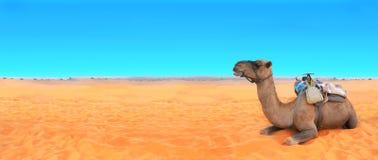 Горизонтальное знамя с верблюдом в пустыне Сахары, Марокко Стоковая Фотография