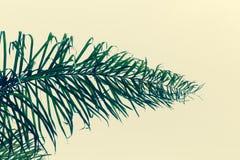 Горизонтальное изображение чувствительных зеленых лист пальмы, с сметанообразной желтой предпосылкой Стоковые Фото
