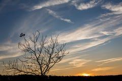 Горизонтальное cloudscape наслоенных облаков на заходе солнца с силуэтом дерева Стоковое Фото