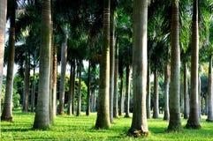 горизонтально пальмы стоковые фотографии rf
