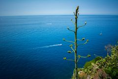 Горизонтальный взгляд зеленого растения на скале в итальянке Nat Стоковые Изображения
