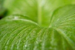 Горизонтальный конец - вверх по воде на зеленой предпосылке лист Стоковое Изображение