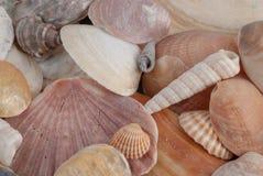 Горизонтальный конец-вверх различных покрашенных seashells стоковое фото rf