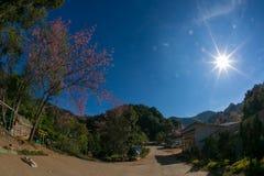 Горизонтальный красивый взгляд деревни с деревьями и цветками стоковое фото