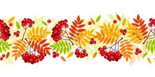 Горизонтальная безшовная предпосылка с рябиной осени разветвляет, листья и ягоды также вектор иллюстрации притяжки corel Стоковые Изображения RF