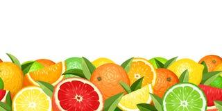 Горизонтальная безшовная предпосылка с цитрусовыми фруктами также вектор иллюстрации притяжки corel Стоковое фото RF